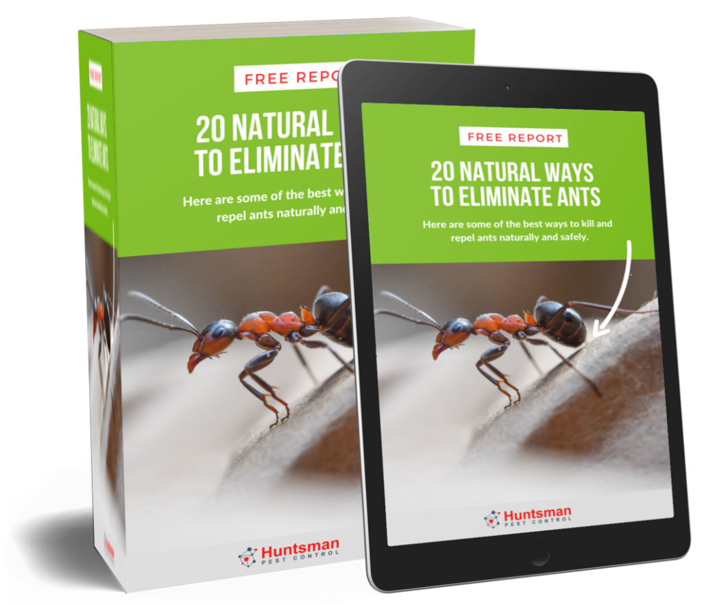 20 NATURAL WAYS TO ELIMINATE ANTS
