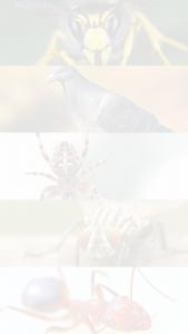 https://huntsmanpestcontrol.co.uk/