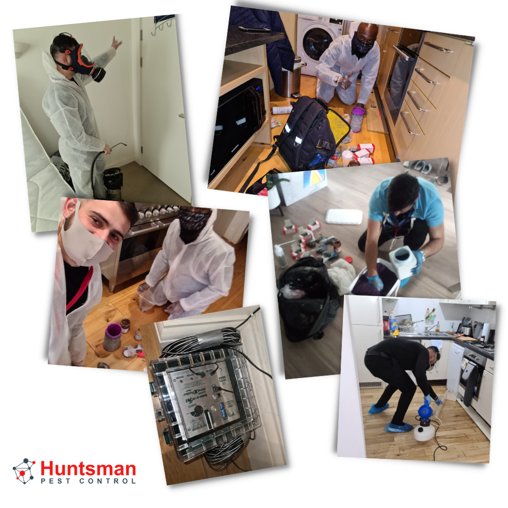 work hunstman pest control in london