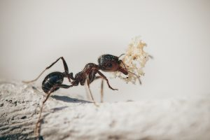 Facts about ants you may not have heard before